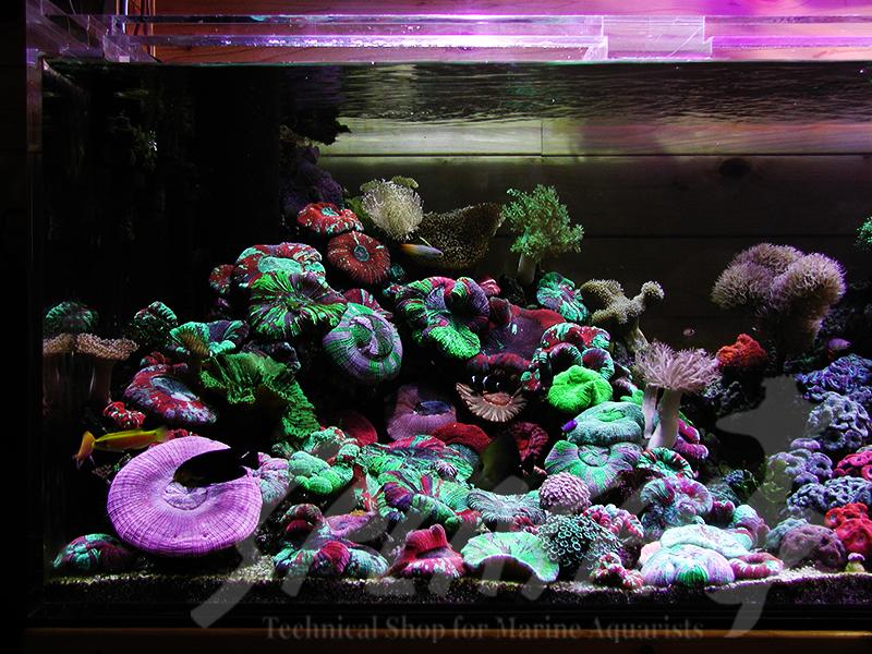 海老沼様 1800×700×600オーバーフロー水槽