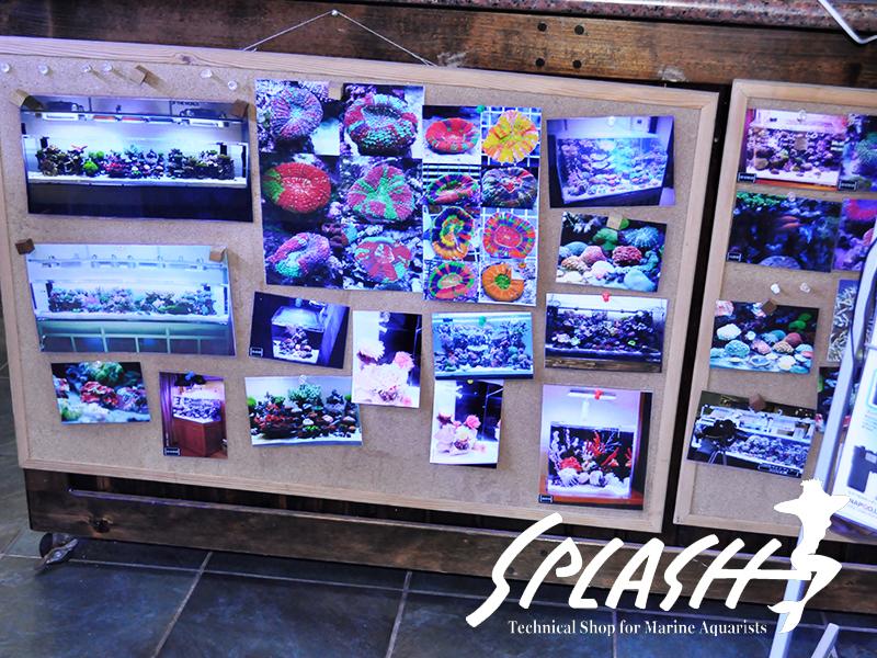 スプラッシュ本店の店内写真